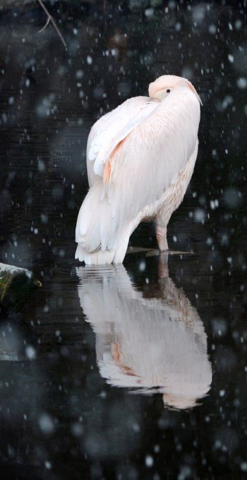 Image: Winter at the zoo