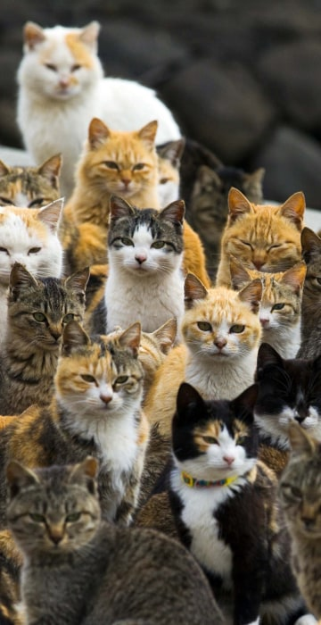 Image: Cats crowd the harbour on Aoshima Island in the Ehime prefecture in southern Japan