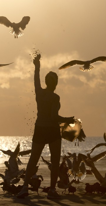 Image: Noreen Clar of Surfside, Florida, feeds birds as the sun rises