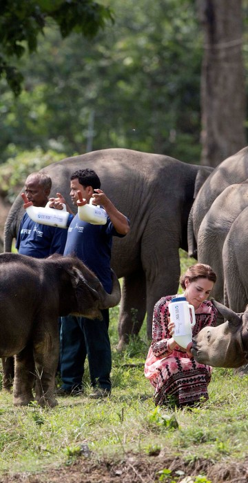 Image: Britain's Prince William and his wife Catherine, the Duchess of Cambridge, feed baby rhinos at the CWRC at Panbari reserve forest in Kaziranga