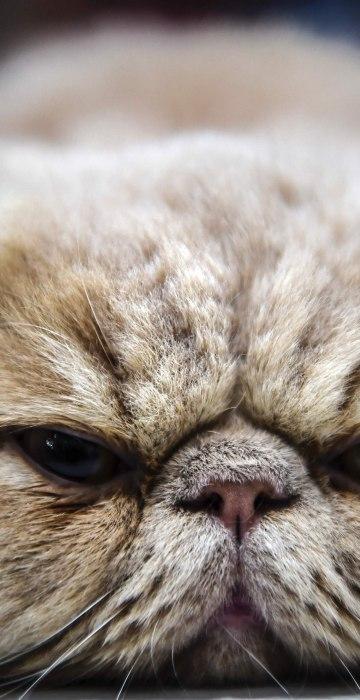 Image: TOPSHOT-TURKEY-ANIMALS-CATS-CONTEST