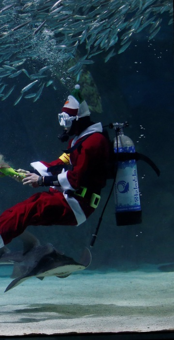 """Image: A diver dressed in a Santa Claus costume performs with sardines during a promotional event for Christmas \""""Sardines Feeding Show with Santa Claus\"""" at the Coex Aquarium in Seoul"""