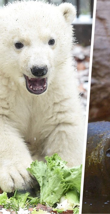 See These Happy Baby Animals In This Week S Best Animal Pictures