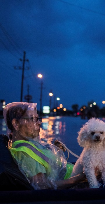 Image: A woman and her poodle wait to be rescued while floating on an air mattress in floodwaters from Tropical Storm Harvey