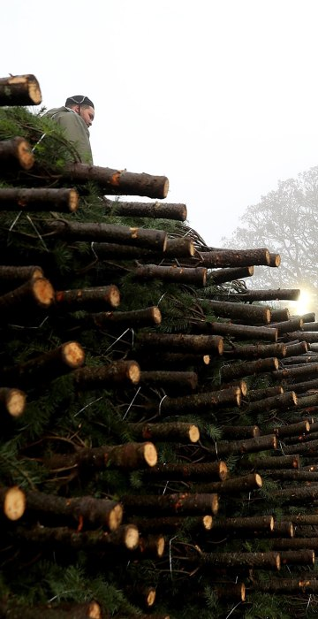 Image: Oregon Christmas Tree Farm Harvests Trees For Upcoming Holiday Season