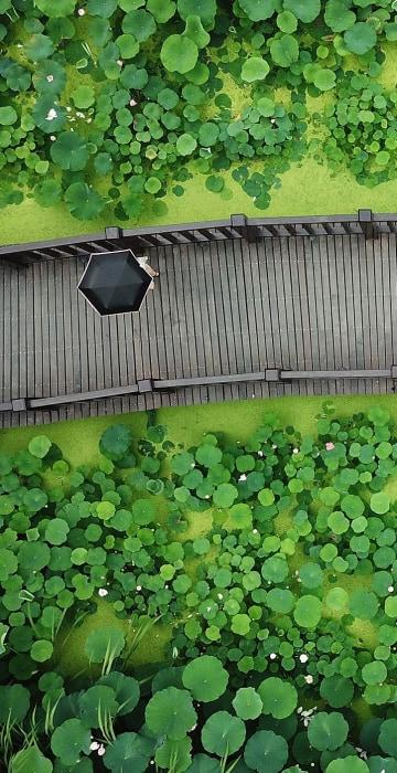 Image: TOPSHOT-CHINA-LIFESTYLE-NATURE