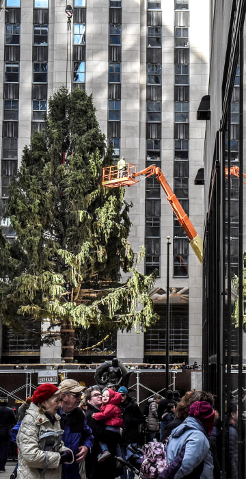 Image: Spectators watch as workers raise the Rockefeller Center Christmas tree in New York City