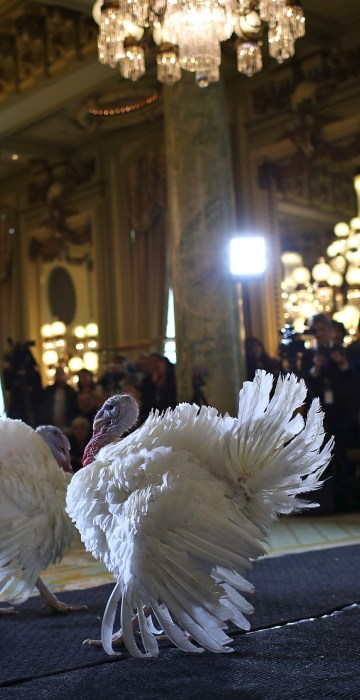 Image: National Thanksgiving Turkeys Meet The Press Before Official Presidential Pardon