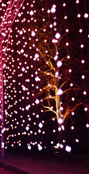 Image: Kew Gardens unveils Christmas illumiunated trail in London