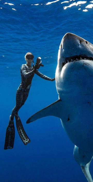 Image: A shark said to be 'Deep Blue', one of the largest recorded individuals, swims offshore Hawaii