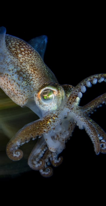 Winner of Macro: 'Fast cuttlefish'