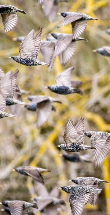 Image: BESTPIX - GERMANY-ANIMALS-BIRDS