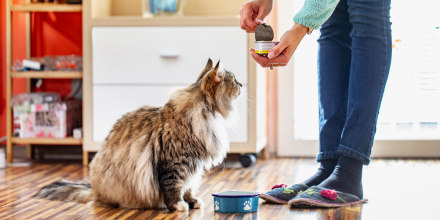 Woman feeding her cat canned cat food. Shop cat food brands including Royal Canin, Purina, Iams and Fancy Feast.