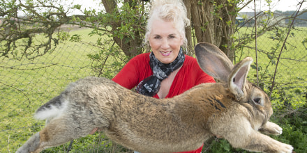 Image: Breeder Annette Edwards from Stoulton in Worcestershire holds Darius, a giant rabbit