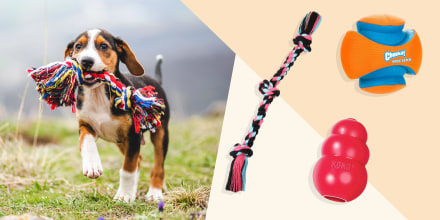Illustration of a puppy holding a colorful toy in his jaw, a kong, ball and a rope toy. The best dog toys in 2021 include squeaky toys, chew toys, Kong dog toys, stuffed plush dog toys and rope toys from Amazon, Walmart, Chewy and more.