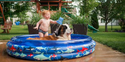 Shirtless baby boy pouring water on dog while standing in wading pool at yard