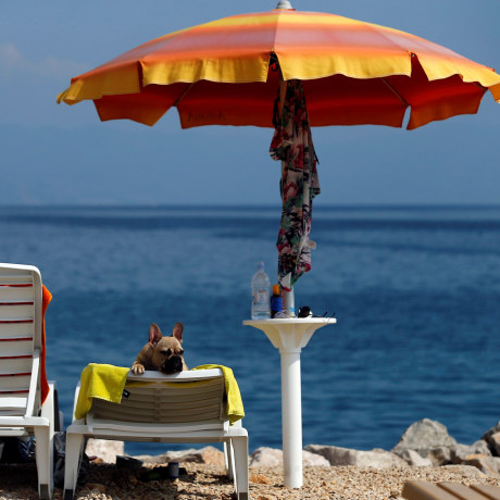 Image: A dog is seen at dog beach and bar in Crikvenica