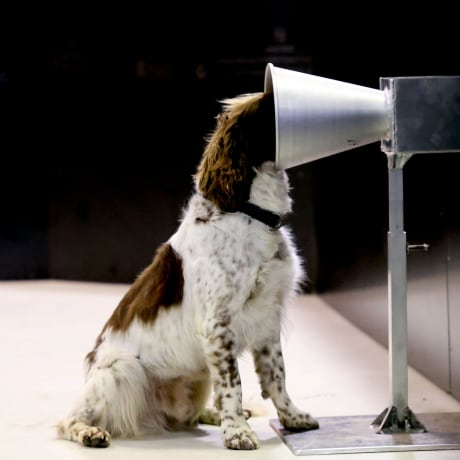 Image: *** BESTPIX *** Adelaide Researchers Train Sniffer Dogs To Detect People Infected With COVID-19
