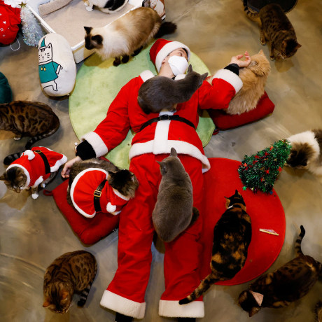 Image: An employee dressed in a Santa Claus costume plays with cats at the Catgarden in Seoul