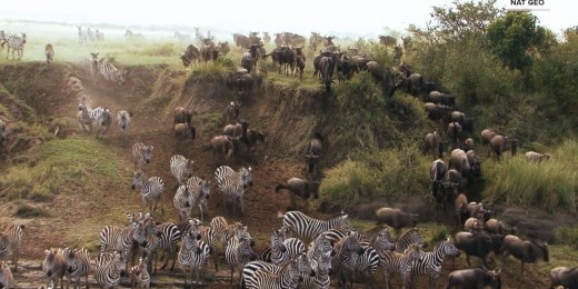 TODAY in the Wild: A look at African animals' changing environment