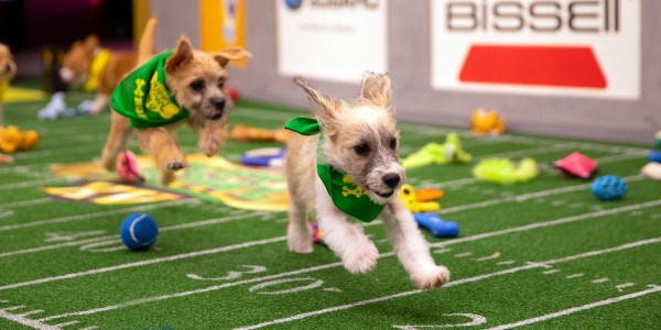 Puppy Bowl 2019: Animal Planet reveals starting lineup - photo#4