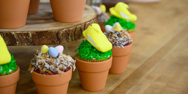 Peek-A-Bunny Cupcakes