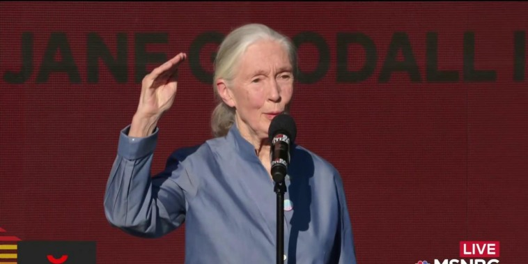 Jane Goodall has a message for Global Citizens from the chimps of Gombe