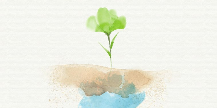 Keeping Earth alive: How photosynthesis is essential to our survival