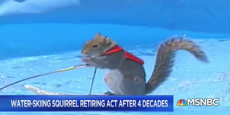 Water-skiing squirrel retiring after 4 decades