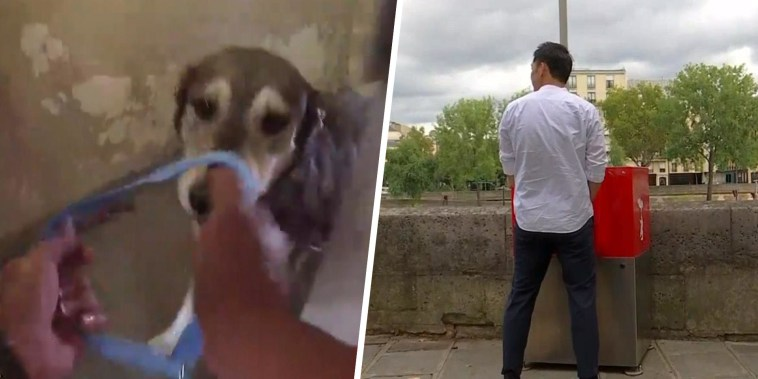 Highs and Lows: Animals rescued from nearing fire, Paris unveils public urinals