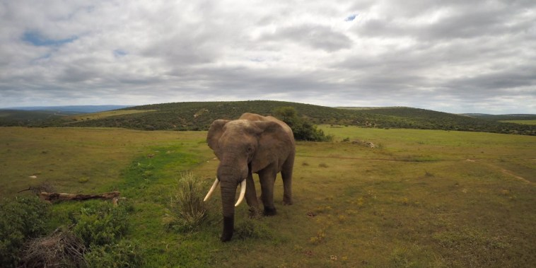 The mysterious gene that helps elephants fight cancer
