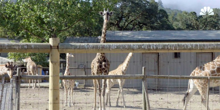 After the Ashes: Saving Safari West (Part 1)