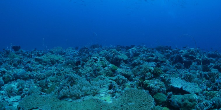How hurricanes affect deep reefs