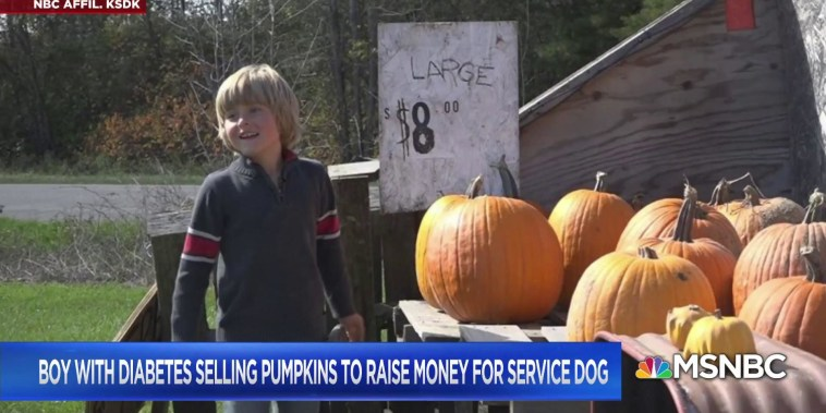 Boy with diabetes selling pumpkins to raise money for service dog