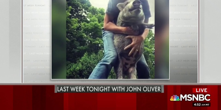 John Oliver has some thoughts on Mika's pig videos