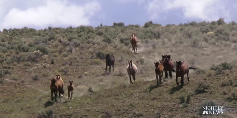 Drought has endangered wild horses across the southwest, but one organization is determined to help