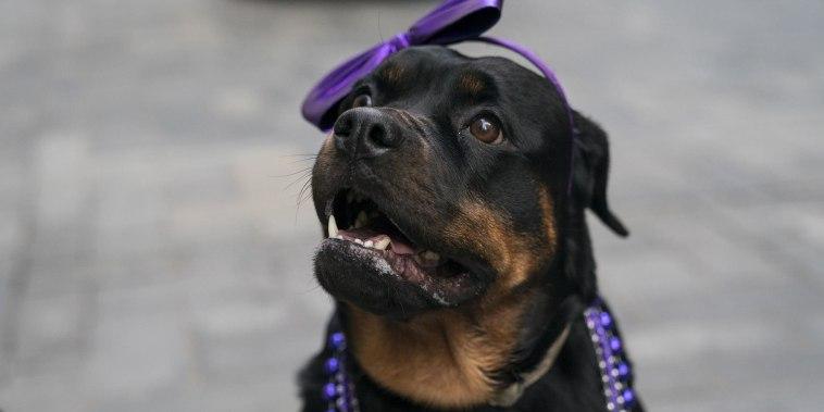 Take a sneak peek at the 2018 National Dog Show