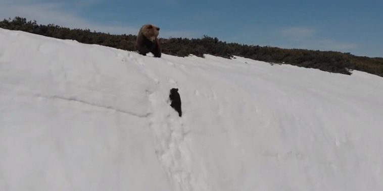 Little bear overcomes struggle to climb mountain in cute video