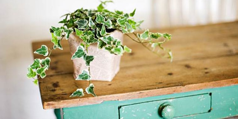 Indoor plants, houseplants, the best indoor plants