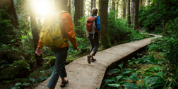 Image: Two people hike through Redwood forest
