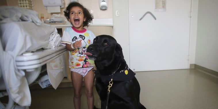 Image: Patient Rayssa plays with Troia, a therapeutically trained dog, during a therapy session in Sao Paulo