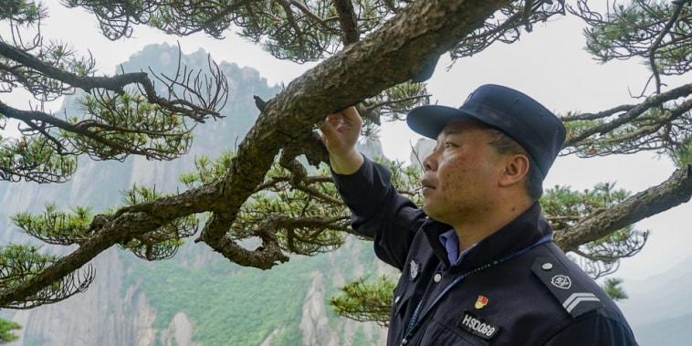 Hu Xiaochun guardian of the tree in Huangshan, China.