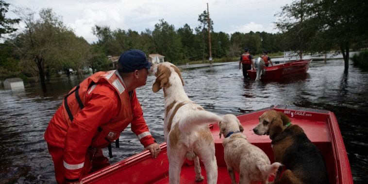 Coast Guardsman Taylor Elliot rescues dogs who were left behind in flooded areas of Columbus County, N.C. on Monday.