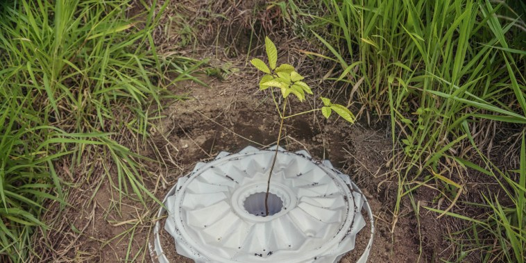 A device designed to help trees grow in deforested regions of the Amazon.