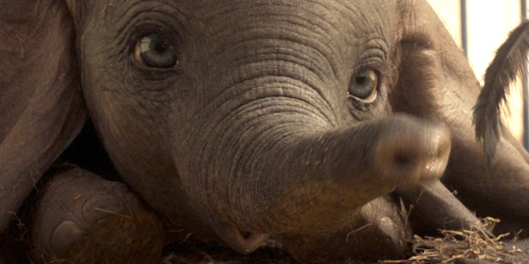 "EARS TO YOU - In Disney's all-new, live-action feature film ""Dumbo,"" a newborn elephant with oversized ears make him a laughingstock in an already struggling circus. But Dumbo takes everyone by surprise when they discover he can fly. Directed by Tim Burton, ""Dumbo"" flies into theaters on March 29, 2019. (C)2018 Disney Enterprises, Inc. All Rights Reserved."