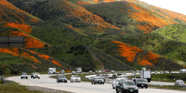 Image: Wet Winter Weather Brings 'Super Bloom' Of Wildflowers To California