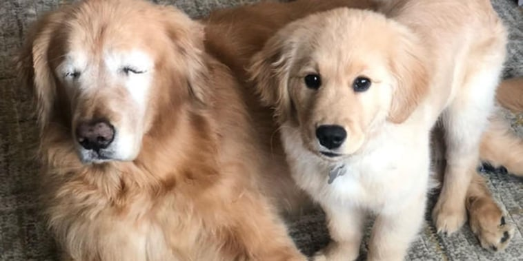 Blind Dog Has His Own Seeing Eye Puppy