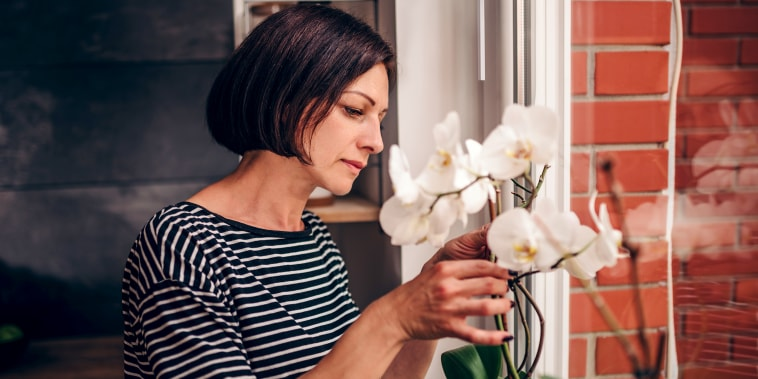 How to care for orchids, white orchid, orchid care