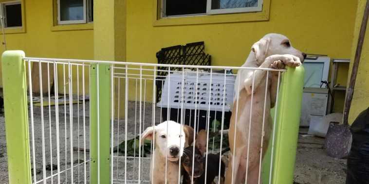 Some of the surviving puppies at Humane Society Of Grand Bahama