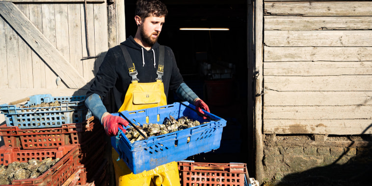Image: Oysters are washed and sorted by size.